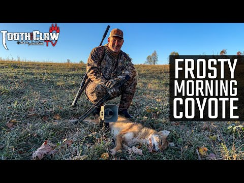 Frosty Morning Coyote – Coyote Hunting