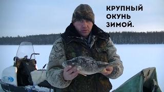 Ловля крупного окуня зимой.
