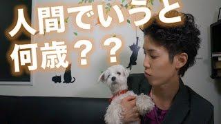 【愛犬の実年齢】うちの子は人間に例えると何歳?? チャンネル登録よろ...