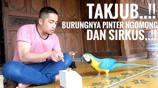 Talking and Sircus with my Parrots Blue and Gold Macaw..!