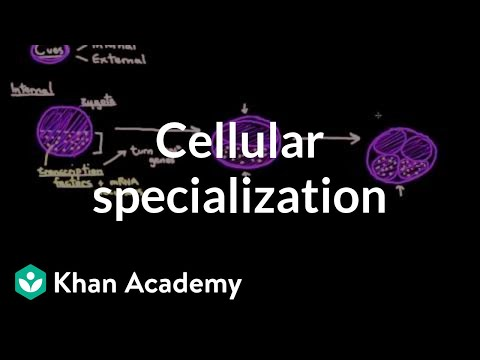 Cellular specialization (differentiation) | Cells | MCAT | Khan Academy