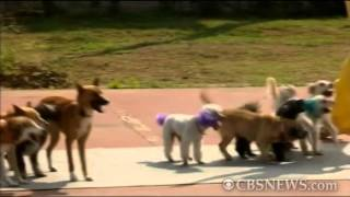 CBS News The Feed - Dogs jumping rope set world record