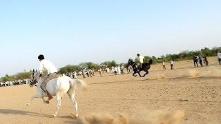 घोड़े के दौड़ संचोर,राजस्थान  horse ki race Sanchore, Rajasthan 2017