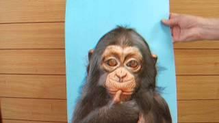 プレスチャートの手法で、チンパンジーとオランウータンの立体表現をし...
