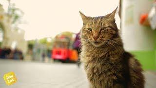 Королівство котів | Трейлер українською №1 (2018)