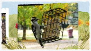 Bird Feeders And Bird Seed @ Tagawa Gardens In Centennial, Co 80016