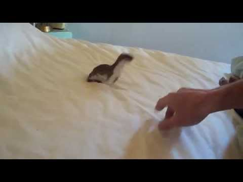 by-popular-demand:-more-ozzy-the-weasel