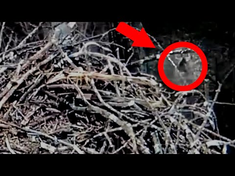 Strange Creature Caught on Tape by Eagle Cam