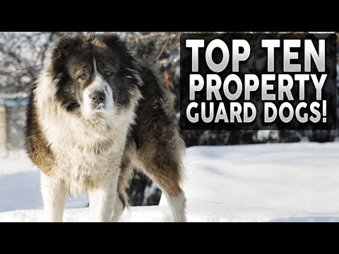 top-10-dog-breeds-for-home-protection!