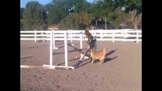 Incredible Dog Learning To Jump
