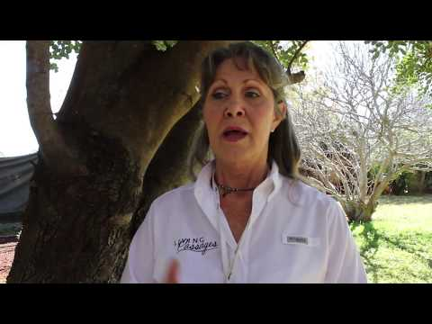 Tracey Shares About Her Lion's Walk And Enjoying South Africa With Christian Travelers