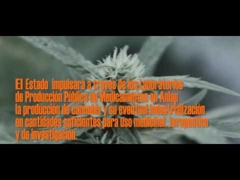 LEY DE CANNABIS MEDICINAL ARGENTINA