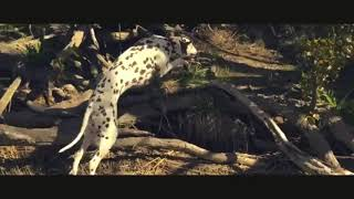 World 5th Fastest  Dog Breed !   ||  Are Dalmatians good family dogs? ||