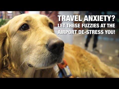 Travel Anxiety? Let These Fuzzies At The Airport De-stress You