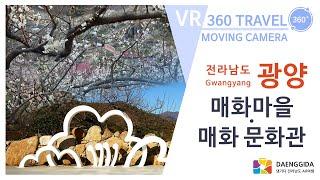 광양 - 매화마을 & 매화문화관 (VR 360º…