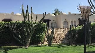Огромные кактусы пустыни