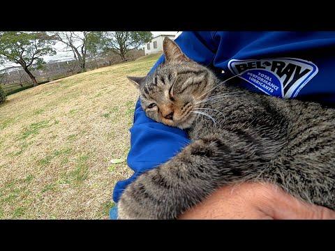 野良猫がトコトコと歩いてきたのでナデナデすると膝の上に乗ってきた