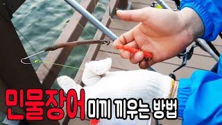 [초짜낚시] 장어낚시 미끼  끼우는 방법 이거보면  초고수 됩니다 !! eel fishing