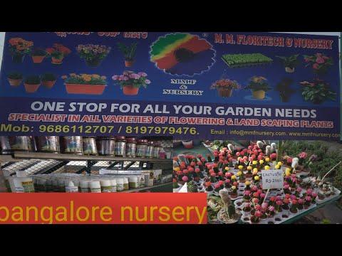 nursery bangalore|m.m.f nursery one stop destination for all garden needs