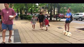1 Yr Old Cavichon, Sammy | Mixed Breed Dog Trainers | Leash Pulling Dog Trainers