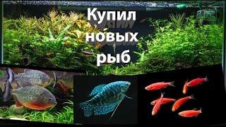 Купил новых рыб в Аквариум / Bought a new fish in the Aquarium / Запуск Рыб(Купил новых рыб в Аквариум / Bought a new fish in the Aquarium / Запуск Рыб подпишись на канал ..., 2016-09-13T16:55:57.000Z)