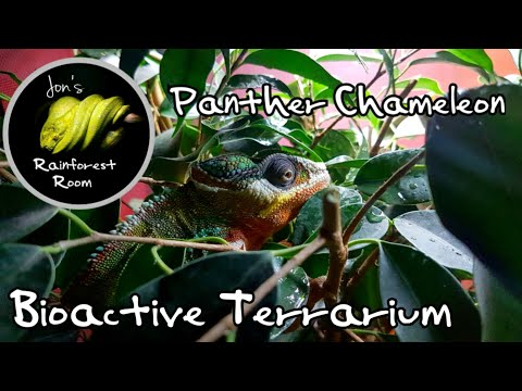 How To Setup A Panther Chameleon Bioactive Terrarium