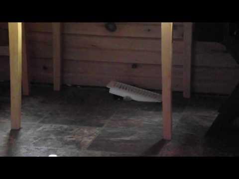 alcatraz cat escapes through floor vent in style.