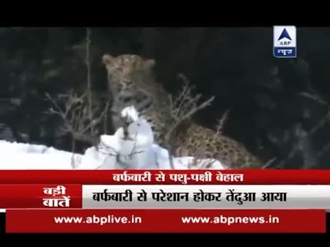 Animals enter residential area after heavy snowfall; Watch reports from Kashmir