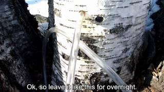 裏山ブッシュクラフト - #03 白樺樹液 (#03 Birch Tap)