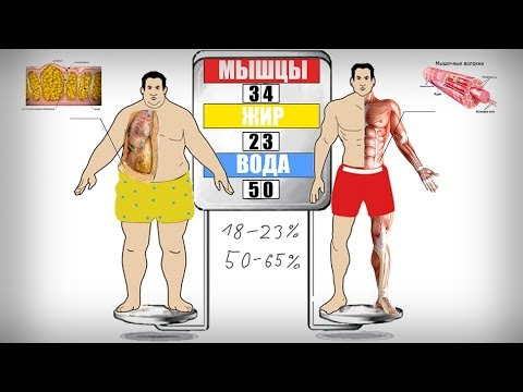 Как вычислить процент жира в теле