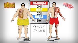 как точно определить состав своего тела (ЖИР, ВОДА ИЛИ МЫШЦЫ)?