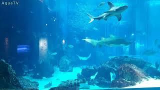 Fukuoka Marine world Aquarium …