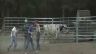 Tyler's Bull Ride