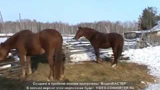животные телята кони овцы