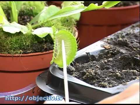 Харьковчанка выращивает экзотические цветы