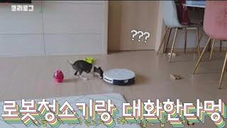 이탈리안그레이하운드 새끼강아지의 목소리(짖음)?[fea…