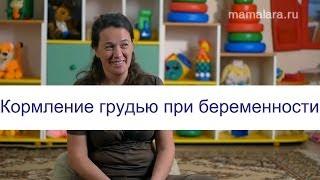кормление грудью во время беременности  Mamalara.ru