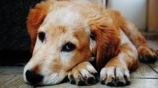 Русский Хатико. Может ли собака забыть хозяина?