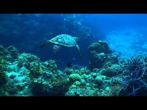 Turtle.MTS