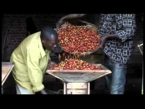 3093BU DR CONGO-COFFEE INDUSTRY