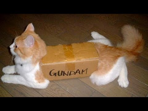 CAN YOU NOT LAUGH at these FUNNY VIDEOS – Funny ANIMAL and FAIL compilation