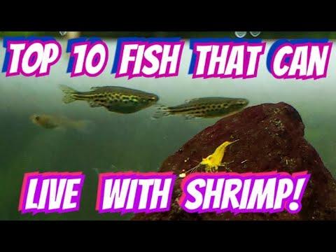 From Cherry Red Shrimp To Caridina & Amano -