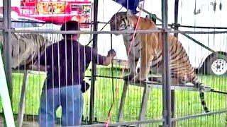 Ban Doug Terranova Circus