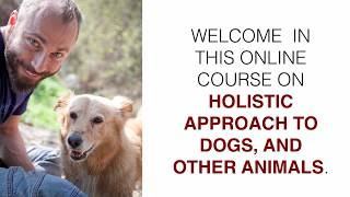 HOLISTIC DOGS PETS ANIMALS BEHAVIOUR TRAINING AND CARE - COURSE PROMO