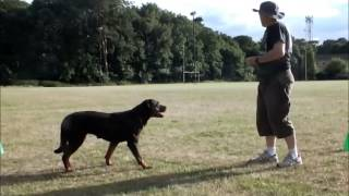 Teaching Your Dog To Walk Backwards With Tigger, Poohbear And Roobie Roo