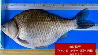 上野原ワンドハタキ46cm
