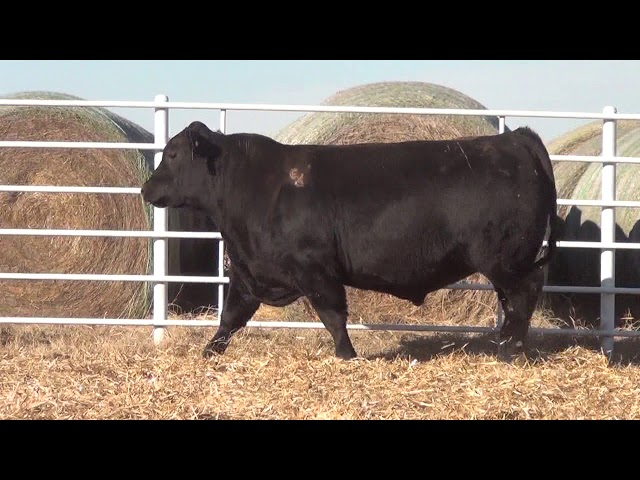 Express Ranches Lot 338