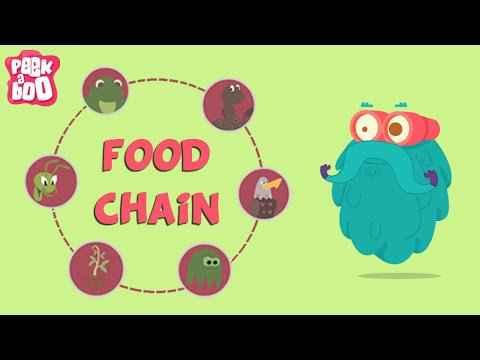 What Is A Food Chain? | The Dr. Binocs Show | Educational Vi