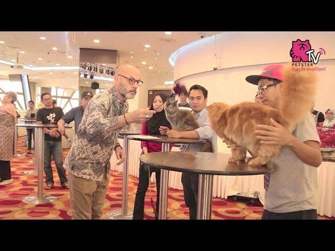 Cat Show 2017 By Kelab Kucing Malaysia @ KL Tower