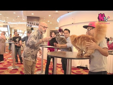 Cat Show 2017 By Kelab Kucing Malaysia @ KL Tower